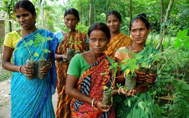 Indiaas dorp plant 111 bomen bij elk geboren meisje