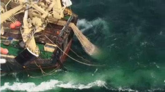Kijktip TED: hoe we de achteruitgang van de oceaan steeds normaler gaan vinden