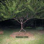 Foto: pooktre.com