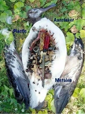 Inhoud maag dode vogel