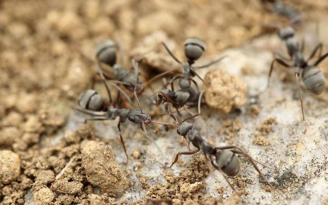 DIY:  9 natuurlijke manieren om van mieren af te komen