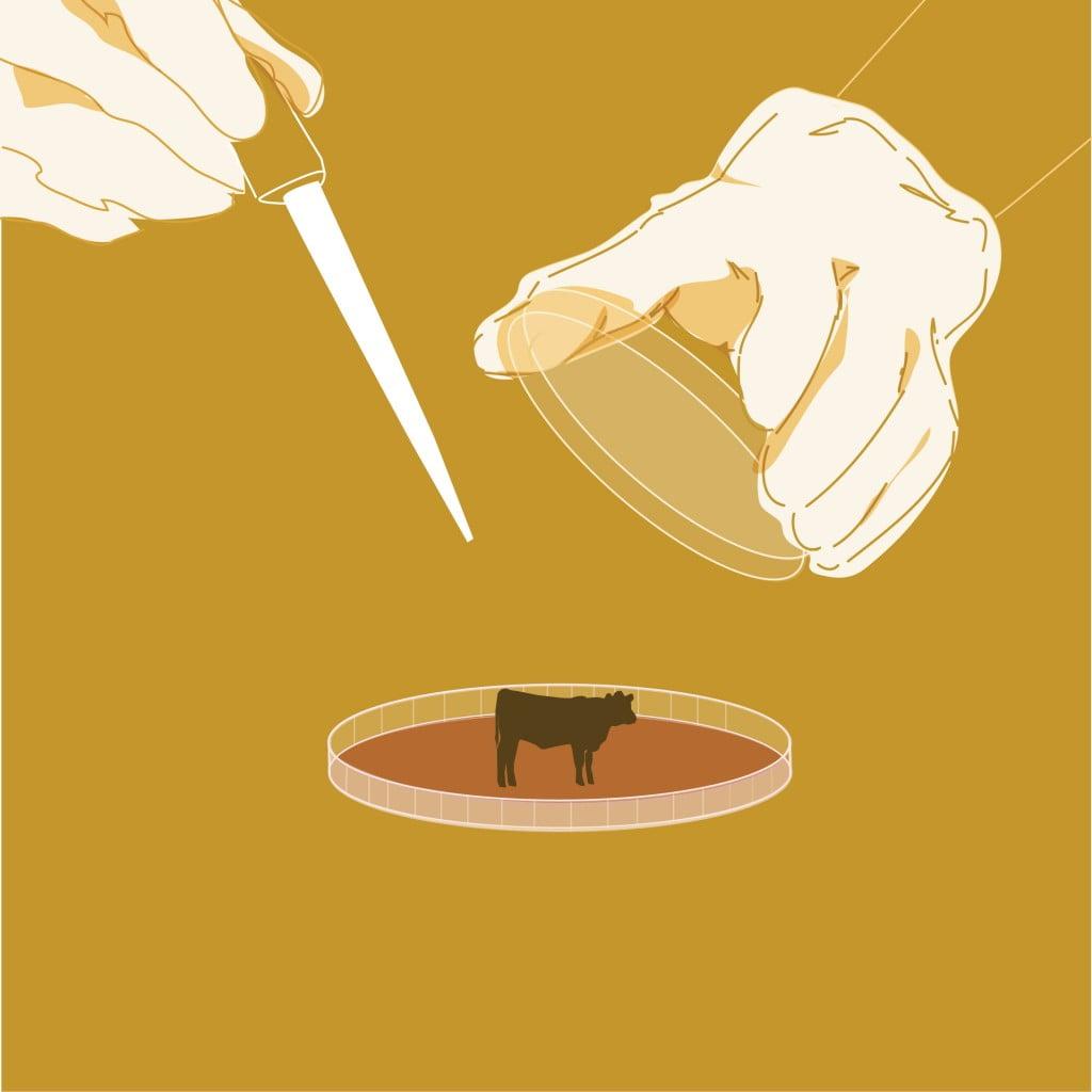 kweekvlees