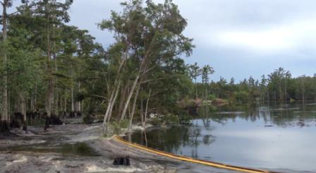 Ongelooflijk: sinkhole verslindt een bos met bomen in seconden (video)