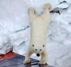 Foto: Save the Arctic - © Greenpeace