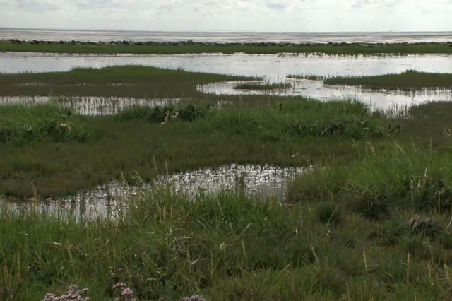 Bewoners Terschelling gaan natuurgebied zelf beheren