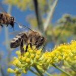 Bijen op een bloem. Foto: Jack Wolf, Flickr