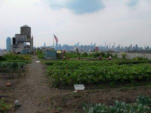 Daktuin in Long Island, New York. Foto: Kristine Paulus