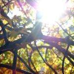 Zonlicht bevat veel vitamine D. Bron:  Brandon Glasbrecht, Flickr