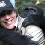 Gorilla Kwibi met Damian Aspinall. Foto: still uit youtube video