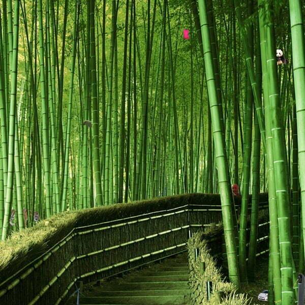Wat schuilt er in het bamboe bos?
