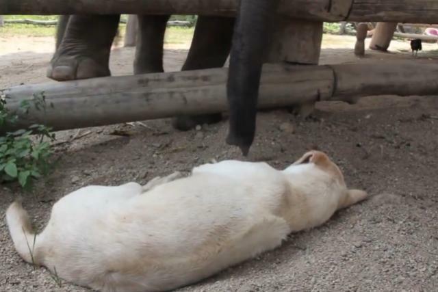 Kijktip: baby olifantje probeert slapende hond wakker te maken