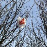 Plastic Tasjes vervuilen milieu. Foto: Tim Parkinson, Flickr