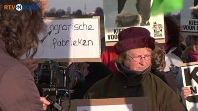 Duitsers en Groningers demonstreren in koeienpak tegen megastallen