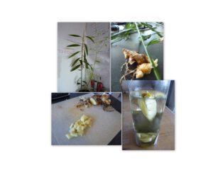 Gember thee in 4 stappen. Bron: eigen archief