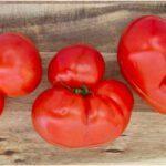 Kromkommer geeft gekke tomaten een kans. Foto: Kromkommer