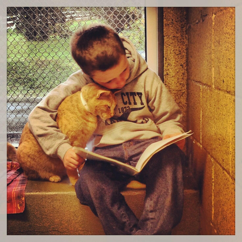 Omdenken: dierenasiel boekt succes met voorlezen aan katten