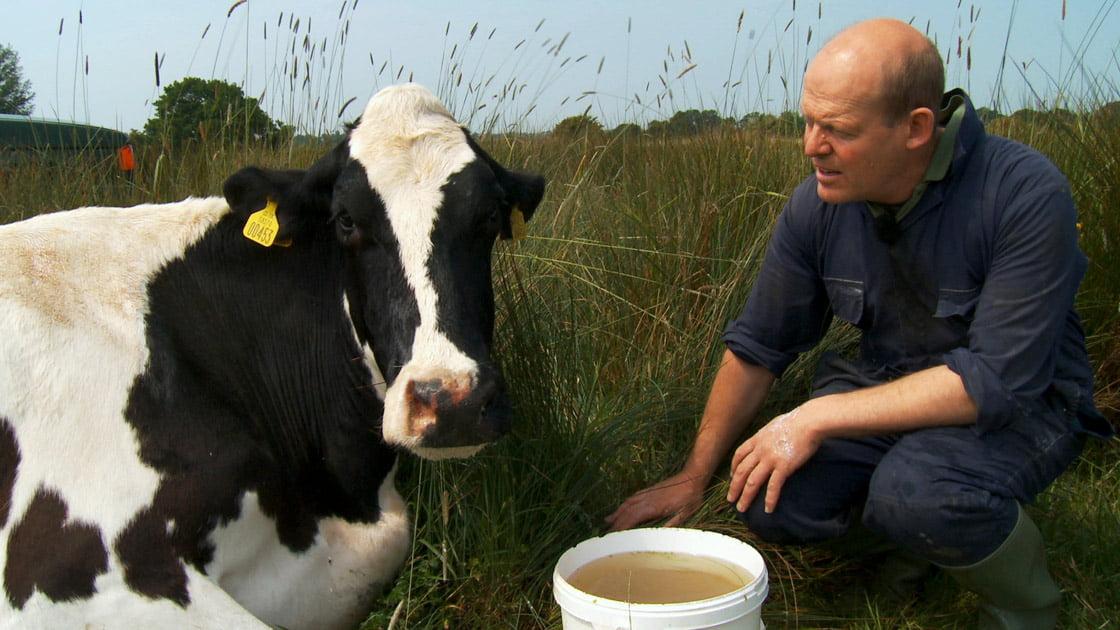 Kijktip: Wat we kunnen leren van koeien