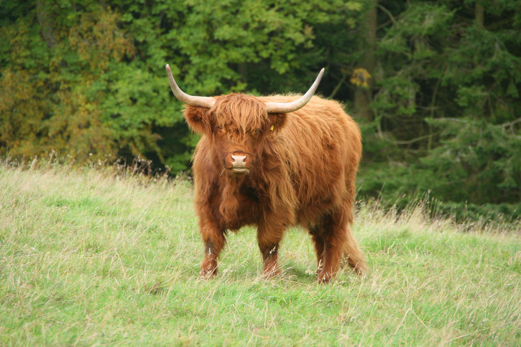 Zo eet je duurzaam vlees, met respect voor de koe