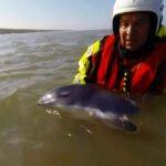 KNRM redt bruinvissen. Foto: still uit youtube video