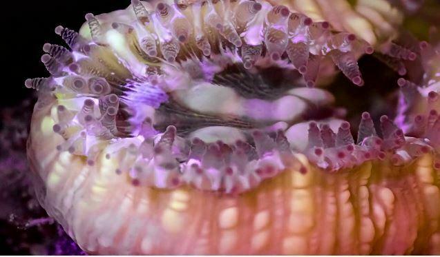 Time-lapse video toont bizarre én fraaie bewegingen van koraal