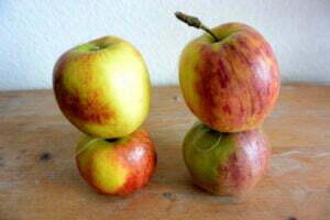 Romeinse appels. Foto: eigen archief.