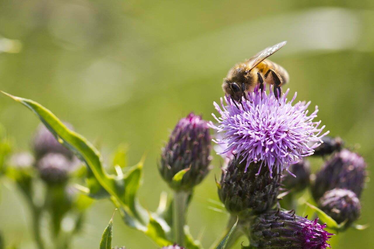 Bijenparadijs Roggebotstaete. Foto: Ted van den Bergh