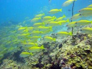 Vissen helpen tegen klimaatverandering. Foto:  Matt Kieffer, Flickr.