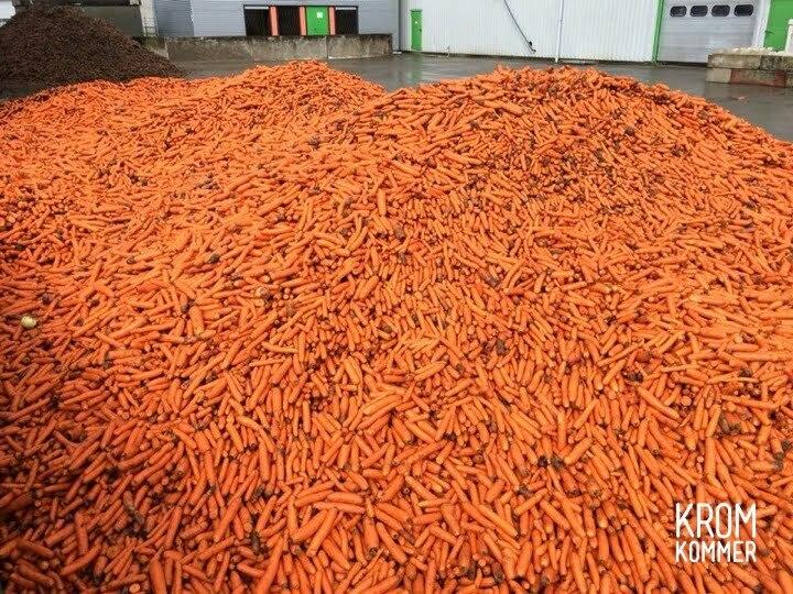 De wortels uit de Noordoostpolder. Foto: Kromkommer