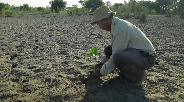 Documentaire Forest man: Man uit India plant 550 ha bos, in z'n eentje