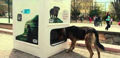 Briljante machine voert zwerfhonden in ruil voor plastic flesjes
