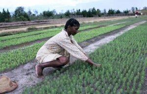 Nederlands voedselplan moet klimaatvriendelijke landbouw bevorderen. Foto: World Bank, Flickr