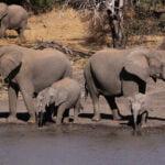 De Afrikaanse olifant heeft het zwaar. Foto: Derek Keats, Flickr.