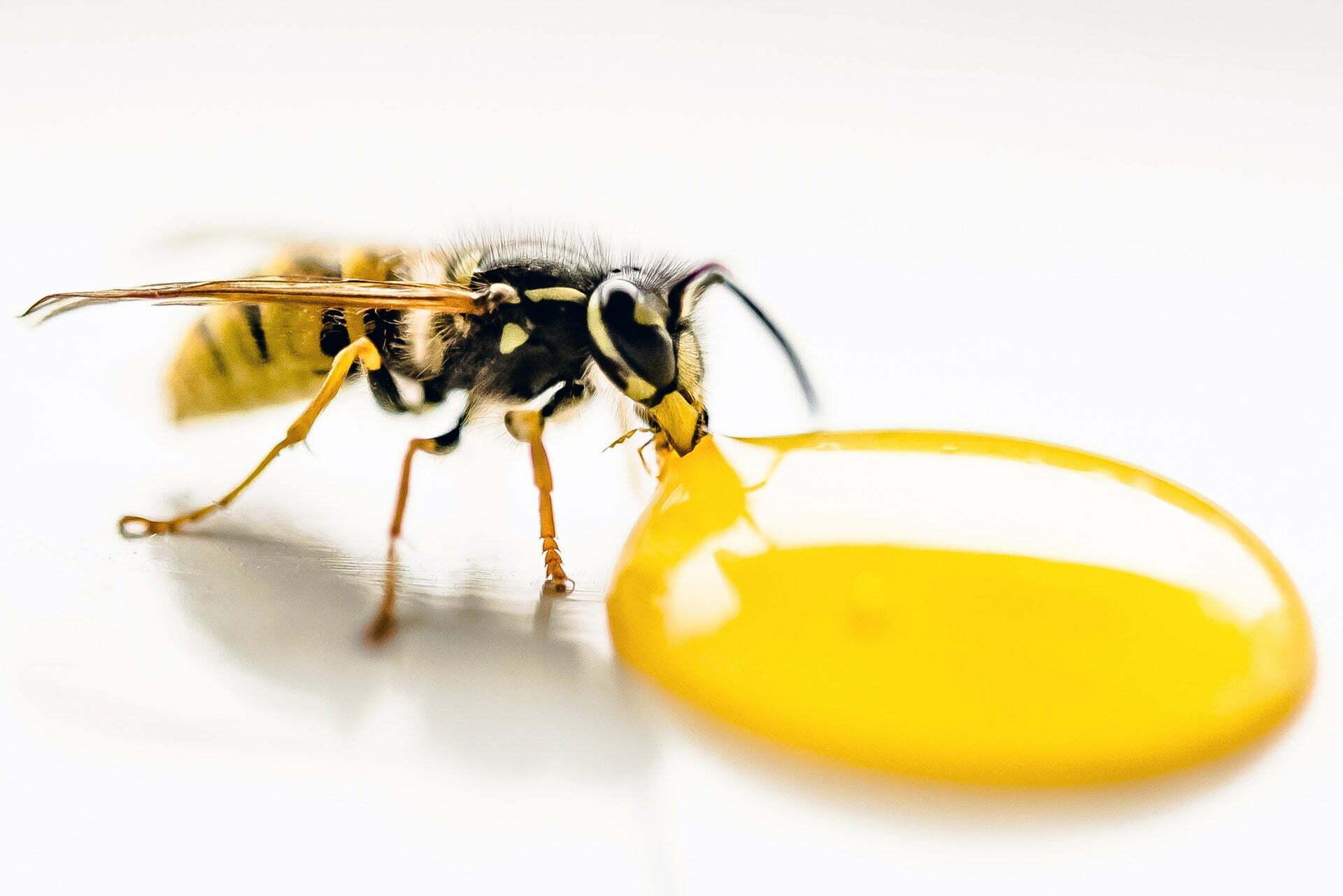honing is natuurlijke antibiotica