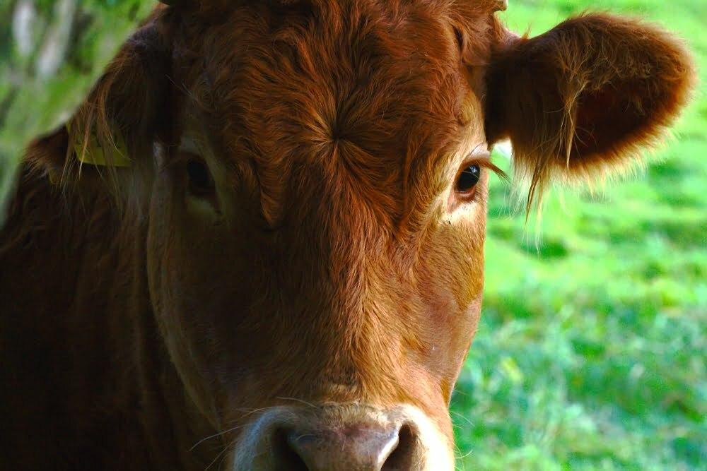 Natuurvlees steeds populairder