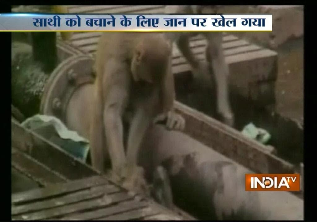 Aap redt geëlektrocuteerd vriend in Kanpur, India. Foto: still uit youtube video