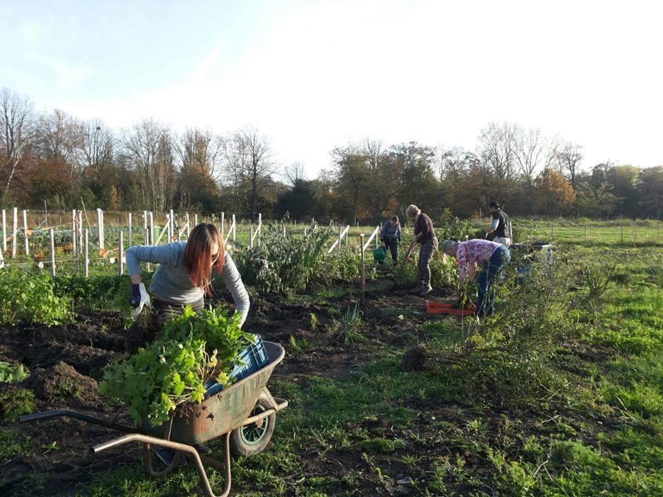 Groene buurtinitiatieven creëren maatschappelijke waarde