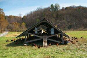 """""""Het blijft een feit dat twee kippen in je huis nemen evenveel ruimte in beslag neemt als één hond"""" Aldus Joel Salatin op zijn Polyface Farm. Foto: Flickr, Brian Johnson & Dane Kantner"""