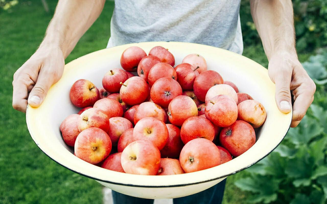 Zo richt je je eetbare tuin het beste in