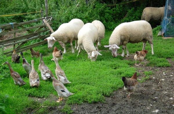 5 manieren waarop permacultuur ook grootschalig in de landbouw toepasbaar is
