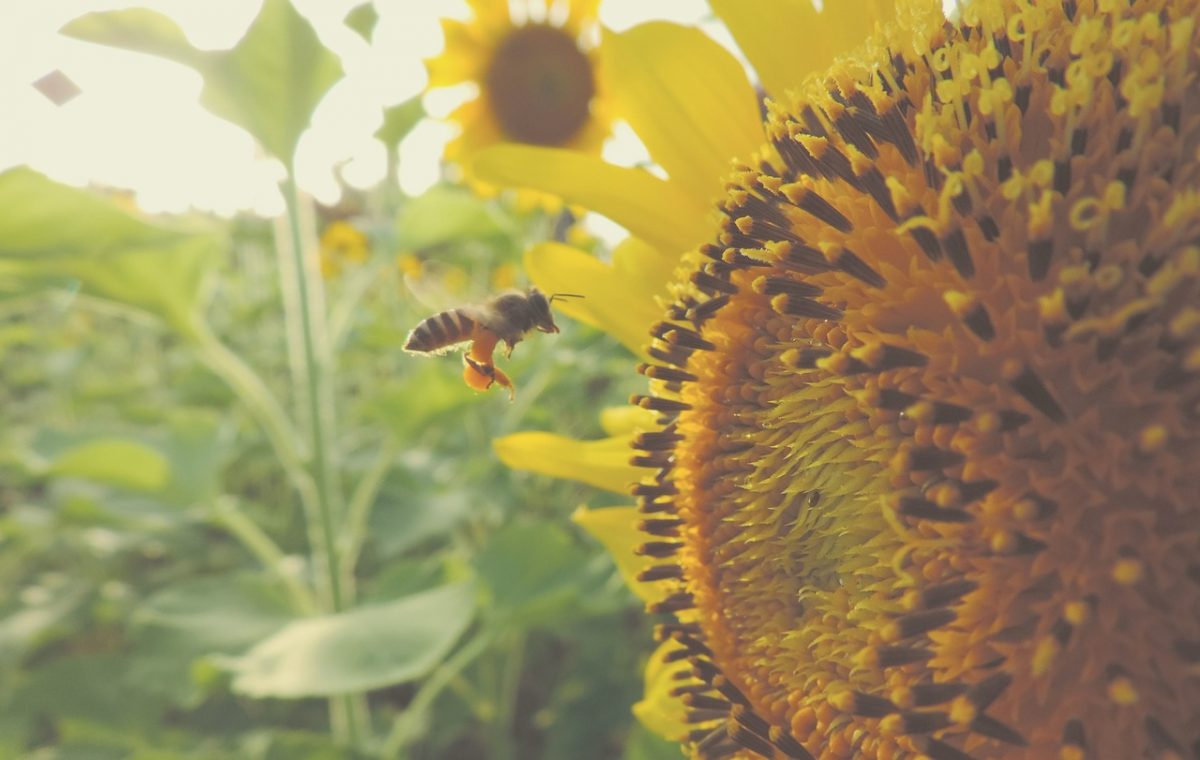 Bijen helpen? Schaf een bijenhotel van Bee Inc. aan