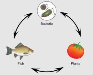 aquaponics ecosysteem