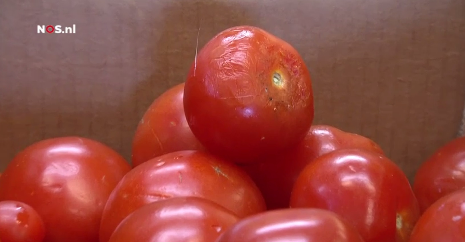 Tomaten. Foto: still uit NOS video