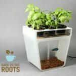 Aquafarm Back to the Roots