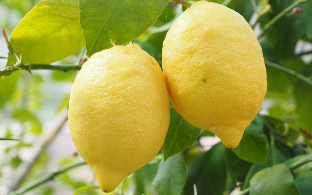 Waarom citroenen extreem gezond zijn