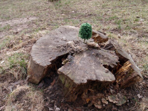 Reforestación ©Daniel Lobo, Flickr, CC BY-SA 2.0