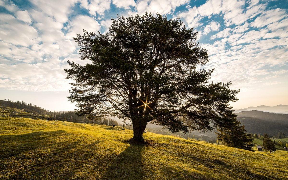 Leef na je dood door als boom