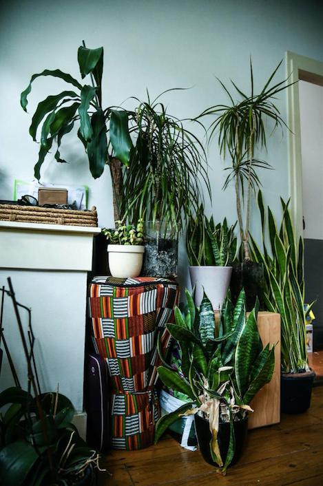 Afbeelding: Het Plantenhuis - Aviva Bing Creations