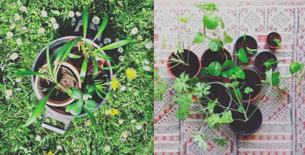 Plantjesruil / stekjesruil