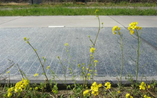 SolaRoad: wegdek als een groot zonnepaneel