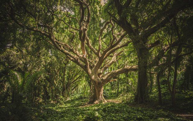 Heb je wel eens een boom gezien?